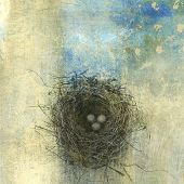 picture of bird-nest  - Bird - JPG