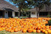 A Day Of Pumpkins poster