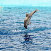 happy dolphin jumping out of the water
