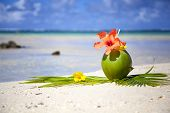 stock photo of mauritius  - Coconut at the beach  - JPG