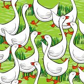 white gooses free run on sunny summer day animal farm life illustration on green