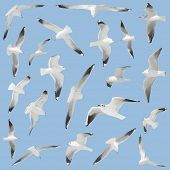 many birds on sky background