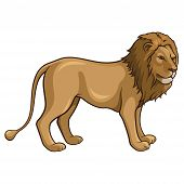 image of african lion  - Vector illustration of an african lion isolated on a white background - JPG