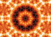 Gerber Flower Abstract Pattern