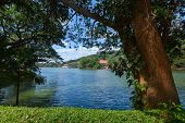 Big tree on a cost of pond in the city of Kandy, Sri Lanka