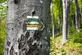 Green, Yellow And White Hiking Trail Signs Symbols In Springtime On Tree