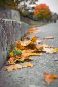 Leaves On Street