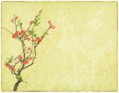 scarlet Malus spectabilis flower on old paper
