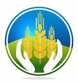 Wheat Quality Symbol