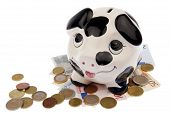 stock photo of cash cow  - Piggy bank with black and white cow spots looking upwards and standing on a variety of Euro banknotes and coins isolated in white background