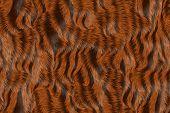 stock photo of furry animal  - Animal fur image of a nice fur background - JPG
