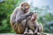 Macaques in Guiyang, China.