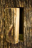 door into the tree hive