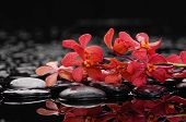 Wet Zen Spa Stones with lying down red orchid