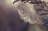 Spider web with colorful background and flower