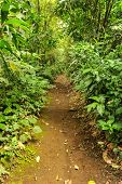 Walking Path Through A Lush Tripical Forest