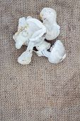 stock photo of edible mushroom  - Edible mushrooms on old and dirty gunnysack with copyspace - JPG