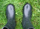 picture of wet feet  - Feet in rubber boots on the wet grass - JPG