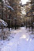 Snowy winter forest fairy tale