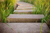 picture of terrazzo  - the terrazzo floor walk way in garden - JPG