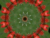 Gerber Daisy circle