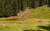 Golte forest, Slovenia