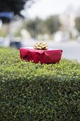 Red Gift Box On A Hedge