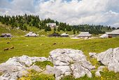 stock photo of velika  - Velika planina - JPG