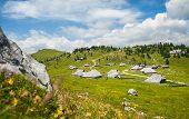 picture of velika  - Velika planina - JPG