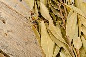 foto of bundle  - Bundle of branches with dry bay leaves - JPG