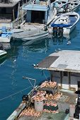 stock photo of conch  - Conch boat tied up in Nassau harbor - JPG