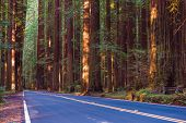 stock photo of redwood forest  - Redwood Forest Highway - JPG
