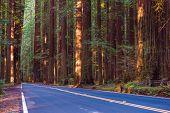 image of redwood forest  - Redwood Forest Highway - JPG