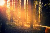 picture of redwood forest  - Redwood Forest Scenery - JPG