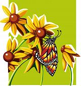 Butterfly with Daisies