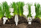 stock photo of save earth  - Macro view of lightbulbs energy - JPG