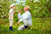 image of grandpa  - happy grandpa with grandson blowing dandelions in spring garden - JPG