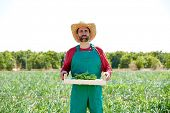 image of orchard  - Farmer man harvesting onions in Mediterranean orchard field - JPG