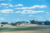 pic of germination  - Ridge with scattered gumtrees beyond paddock with green tinge of newly germinated crop with patchy shadow from scattered fluffy white clouds in bright blue sky - JPG