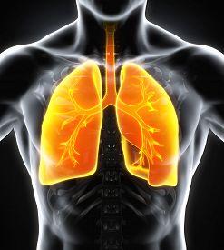 stock photo of frontal lobe  - Human Respiratory System Illustration  - JPG