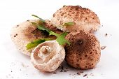 picture of shroom  - Beautiful Mushrooms on white background - JPG