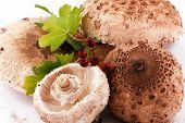 pic of shroom  - Beautiful Mushrooms on white background - JPG