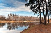 Birch Grove At The Lake 2