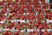Strawberries On Market Stall. Nice.