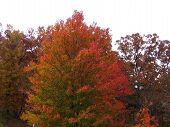 Autumn Vibrant Tree