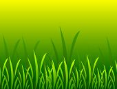 Grass In  Illustration