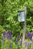 Birdhouse in the Lupines