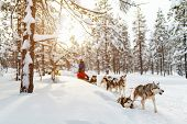 Sledding with husky dogs in Lapland Finland poster