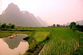 yangshuo landscape - rice field