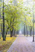 Autumnal Park Landscape, Trees With Fallen Yellow Foliage Alongside Footpath In Fog poster
